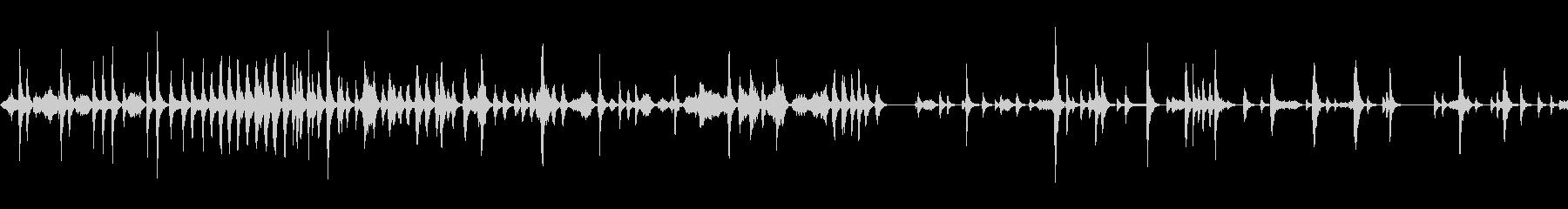 ゴールデンライオンタマリン-猿の未再生の波形