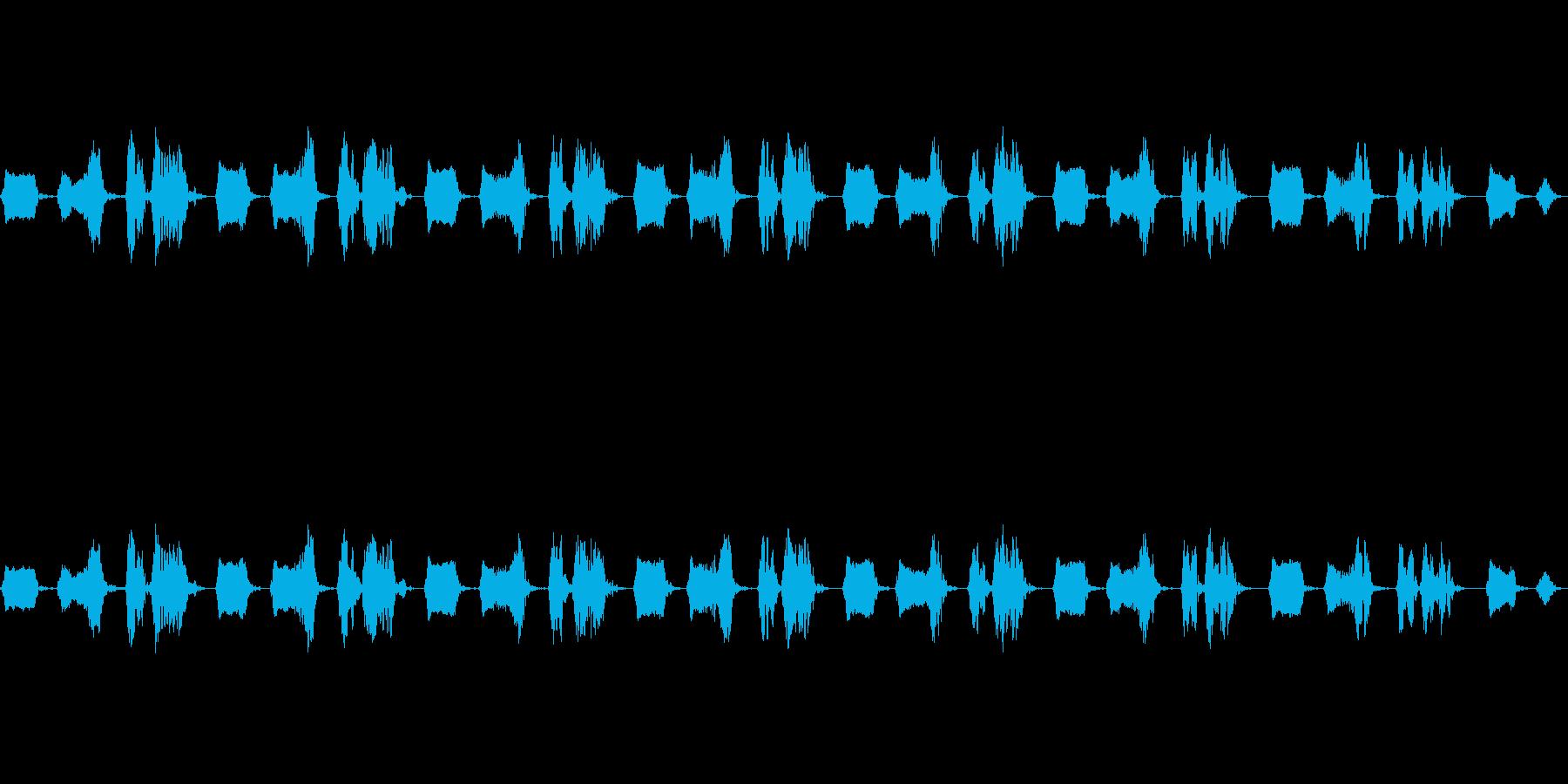 鳥 雉鳩 キジバト 山鳩 ヤマバトの再生済みの波形