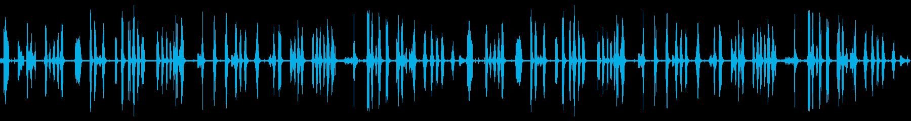 鳴き声、R歯類他の野生動物の再生済みの波形