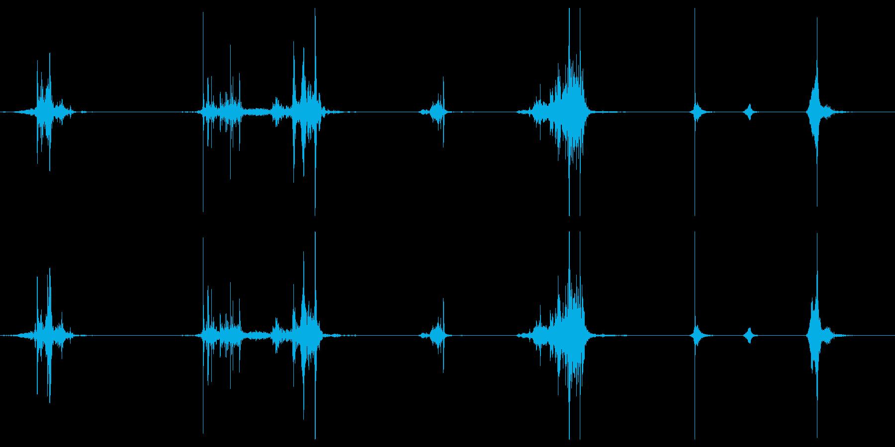 ASMR りんごを歯でかじりついている音の再生済みの波形