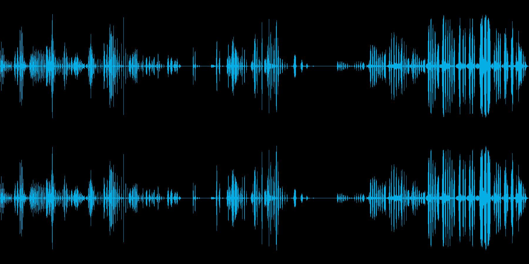 人間、笑い、笑い; DIGIFFE...の再生済みの波形