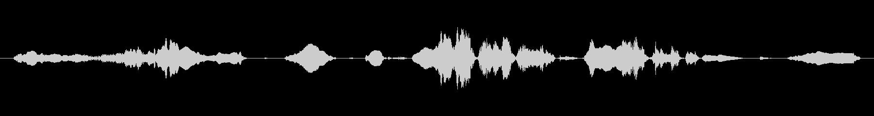 鳴き声 チャイルドラフティックルス...の未再生の波形