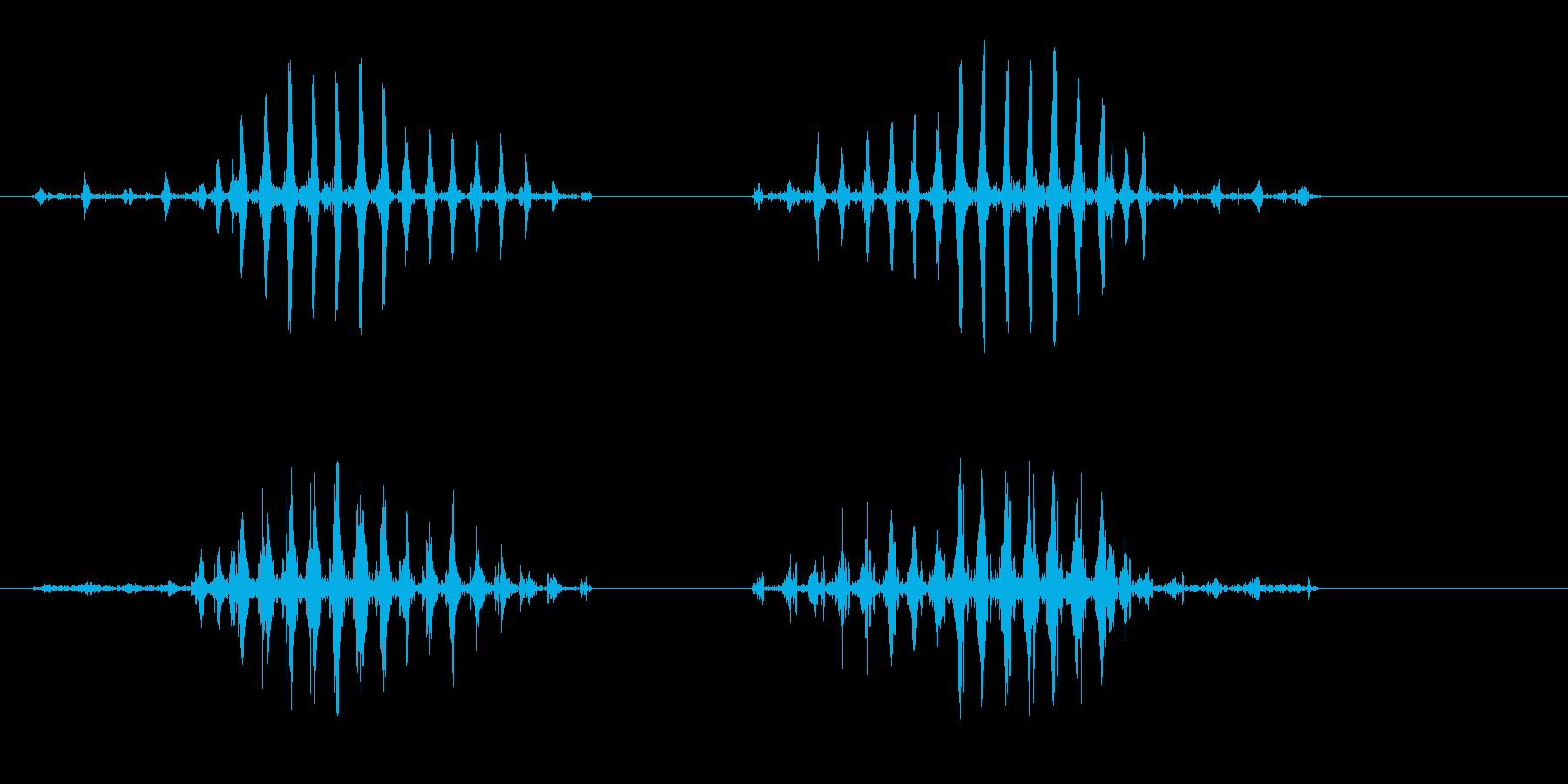 クワックワッ(リアルなアヒルの鳴き声)の再生済みの波形