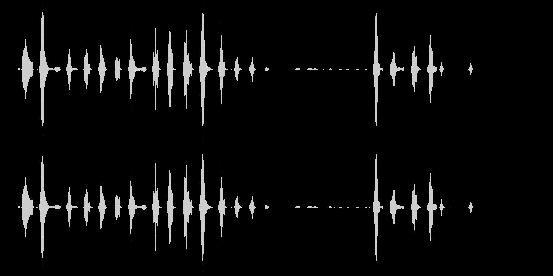 犬、セントバーナード・ウィネス。高...の未再生の波形