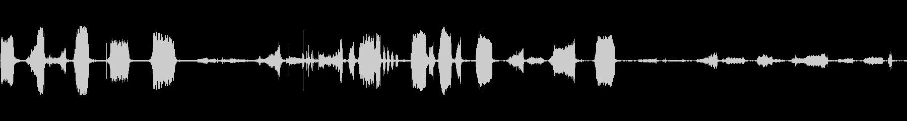コンゴウインコ鳥の声ボーカルの未再生の波形
